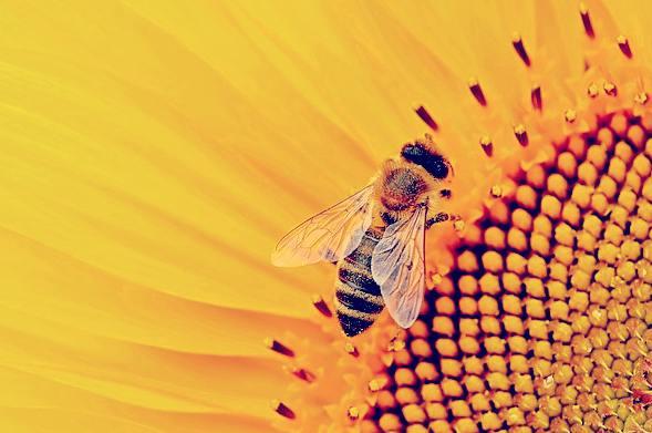 signifie rêver des abeilles