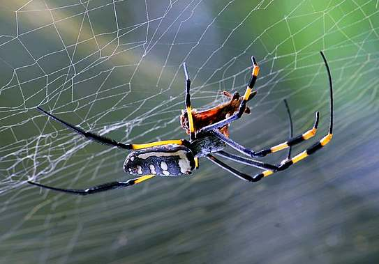 rever de araignes
