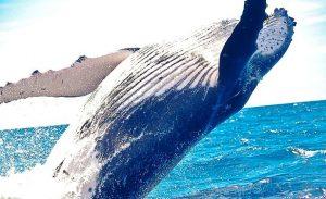 rever de baleines