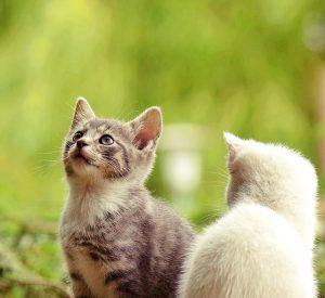 rever de chats