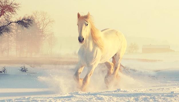 rever de cheval