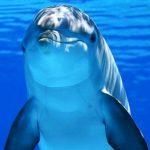 rêver de dauphins