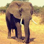 Rêver d'éléphants