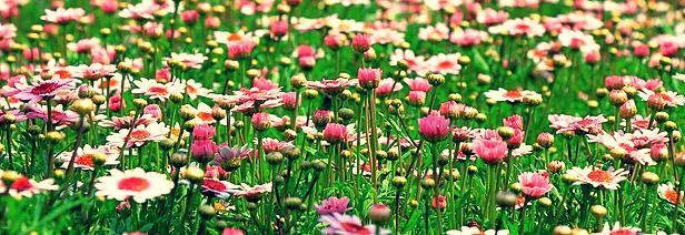 rever de fleurs
