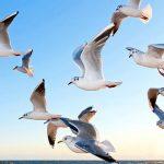 Rêver d'oiseaux