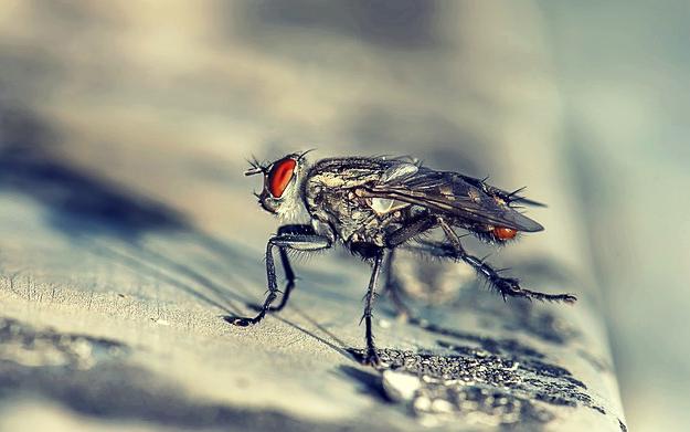 rever de mouche