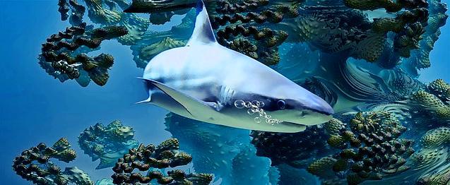 rever de requin