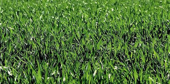rever de herbe