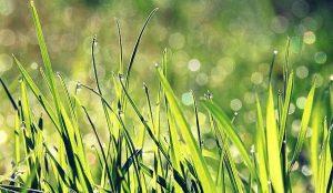 rever d'herbe