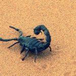 Rêver de scorpion