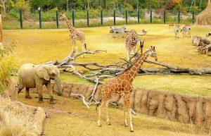 Rêver de zoo
