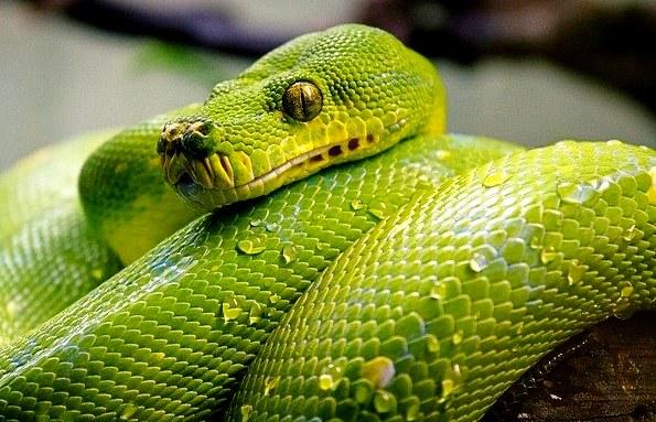 rever de serpent qui mord