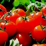 rever de tomates