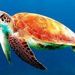 rever de tortue