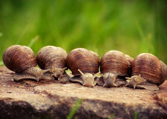 Rêver d'escargots