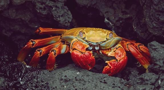 Rêver de Crabes