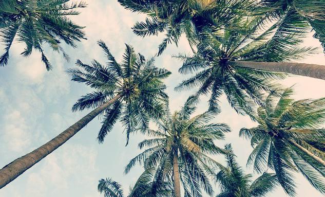 rêver avec des palmiers